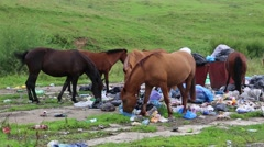 Horses eating garbage at the dump Stock Footage