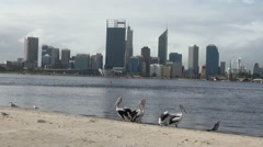 Pelicans on the beach. Perth's skyline, viewed from Mill Point Stock Footage