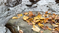 Creek at autumn - waterstream and rock, on site sound Stock Footage