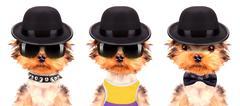 Dog dressed as mafia gangster Stock Photos