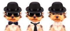 Dog dressed as mafia gangster - stock photo