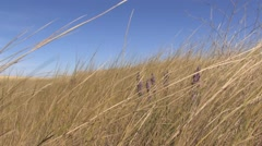 Windswept Plains 3 at 25fps Stock Footage