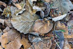 Fallen autumn leaves for background Stock Photos