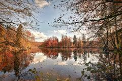 Panorama of autumn trees at a glassy lake Stock Photos