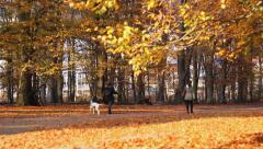 Walking in the autumn park ..dalmatian dog Stock Footage