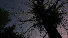 Stars Under a Spooky Tree Stock Footage