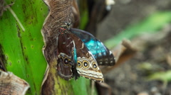 butterfly hothouse wildlife nature environment plants - stock footage