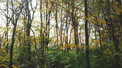 Autumn Forest Canopy Stock Footage