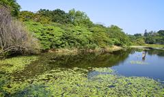 The wetland swamp near city in southern Taiwan Stock Photos