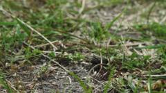 Mushroom in grass Stock Footage