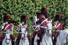 Belgium cavalry captain commands Royal horsemen trumpets parade, click for HD - stock footage