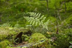 fern and a mossy stub - stock photo