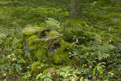 Fern and a mossy stub Stock Photos