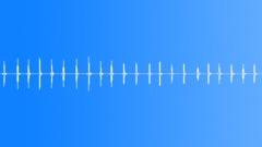 Cricket 2 (loop) - sound effect