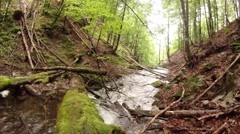 Creek flows under the windfall in a summer forest Stock Footage