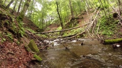 Quiet mountain stream in summer forest through the windbreak Stock Footage
