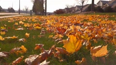 Fall color leaves Stock Footage