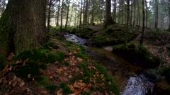 Bavarian forest -autumn Stock Footage