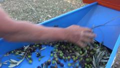 Defoliation of Olives (5) Stock Footage