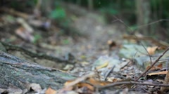 Path in the jungle of Koh Samui. Thailand. HD. 1920x1080 Stock Footage