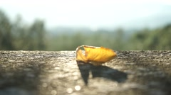 Yellow leaf on a stone wall Stock Footage