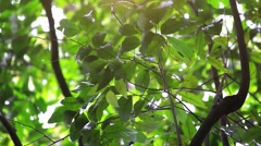 Green forest with trees and leaves with bright sun in jungle. HD. 1920x1080 Stock Footage