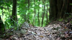 Green jungle forest with sunlight in Thailand. Blurred background. HD. 1920x1080 Stock Footage