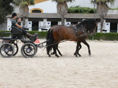 Horses on training. Related clips are in my portfolio in 1920x1080. Stock Footage