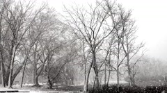 Snow, Blizzard, Public Park, Winter Stock Footage