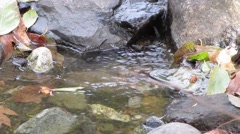 Beautiful babbling stream Stock Footage