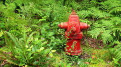 Red Fire Hydrant in Nature - stock footage