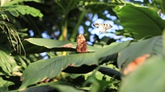 Flying and resting Butterflies Stock Footage