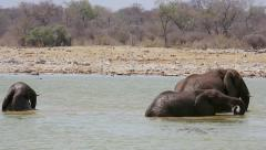 Endangered African Bush Elephants playing in water in Etosha National Park. Stock Footage