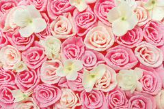roses flower pattern background, floral pink texture - stock photo