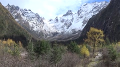 Snow mountains and yellow trees in autumn Stock Footage