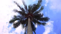4k Time lapse of green palm tree on blue sky background Arkistovideo