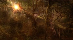 Ambient autumn sunlight magical fantasy forest background Stock Footage