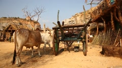 Bull cart at rural home Stock Footage