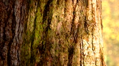 Tree trunk with shadows moving on bark Stock Footage