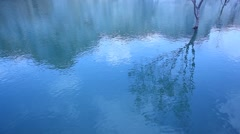 Tree water Reflection in the pond Stock Footage