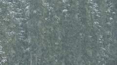 Telephoto shot of early season snowfall in the forest Stock Footage