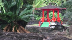 Gazebo and ferns, sago palms Stock Footage