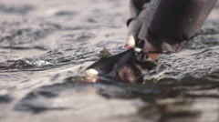 A man holds a fish in the river water and lets it go Stock Footage