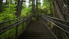 Looking Up Staircase In Forest Stock Footage