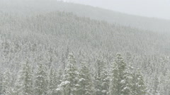 Snowing on a forested mountainside in the Canadian Rockies Stock Footage
