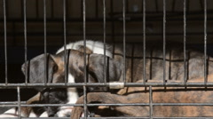 Dog in animal shelter Stock Footage