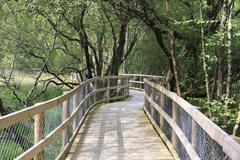 Walking wooden trails in Wicklow Mountains National Park. - stock photo