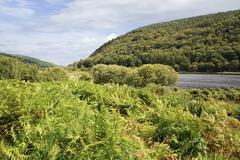 Wicklow Mountains National Park - stock photo