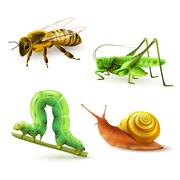 Insects realistic set - stock illustration