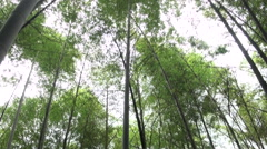Hsitou-Sitou-Xitou giant bamboo forest Stock Footage